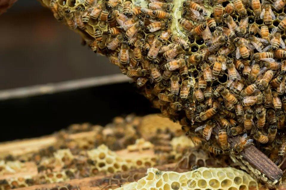 贵阳划算的蜂花粉批售,息烽天然蜂花粉