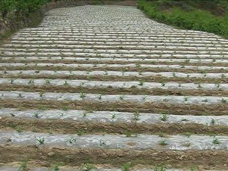 大量供应农业专用易胜博备用网址|普通易胜博备用网址