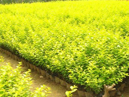苗木种植基地和您分享苗木出圃的注意事项。