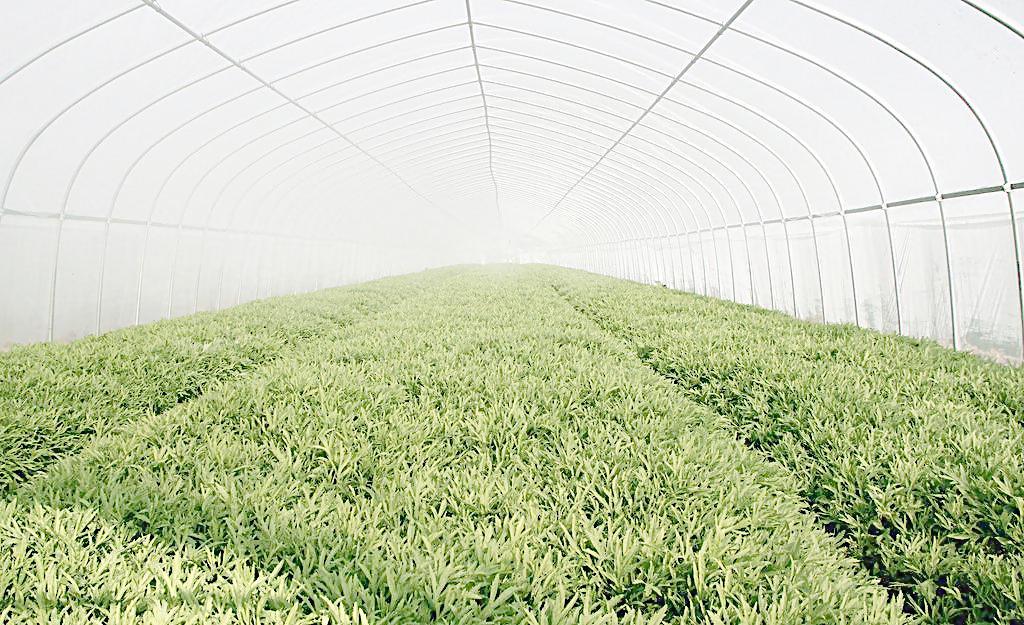 云南长寿流滴膜|南宁可靠的农业大棚膜批发商推荐