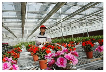 云南花卉大棚工程-放心的花卉大棚建设上哪找