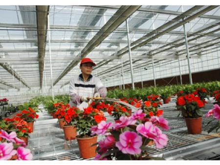 花卉大棚建设
