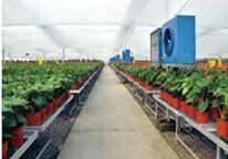 山西花卉大棚温室-哪里有提供好用的花卉大棚温室