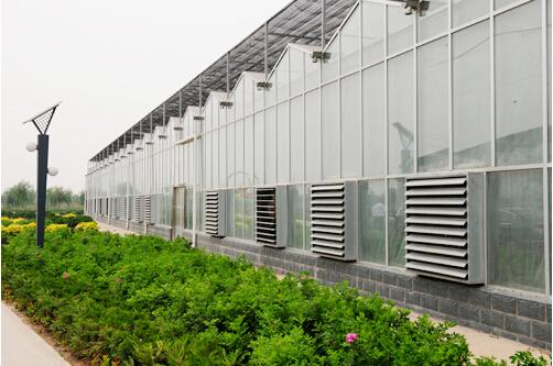 专业温室大棚厂家——哪里有提供口碑好的温室大棚