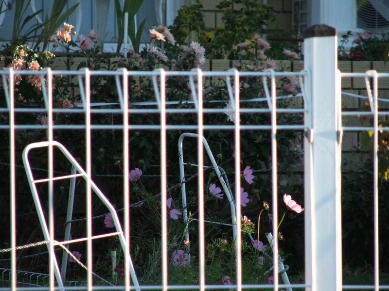 泉州园林围栏-品质好的园林围栏哪里有